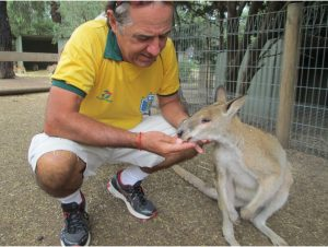 Rocky feeding a Wallaby at Featherdale Wildlife Park