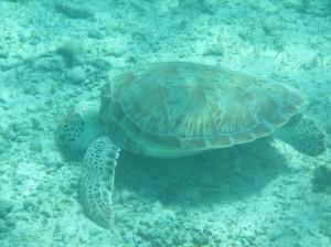 Turtles